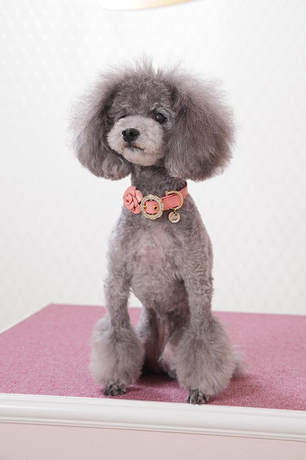犬 首輪 かわいい Amelia