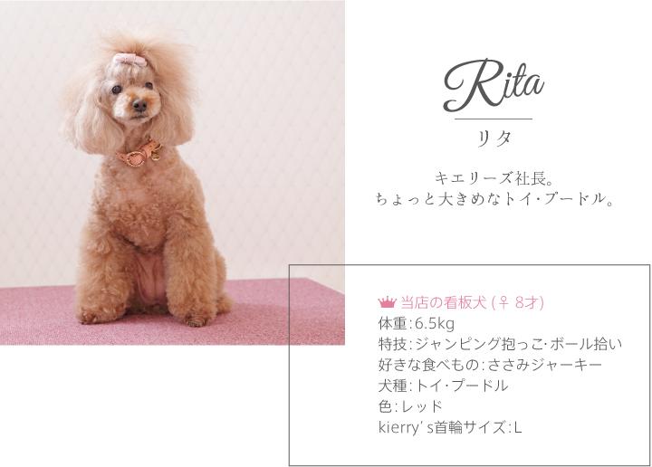 リタ キエリーズ モデル犬 首輪 リード