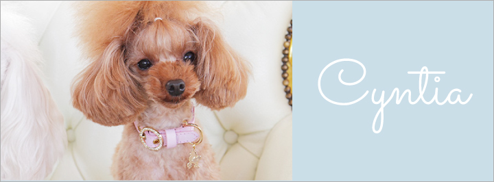 プードル Cyntia【シンシア】 犬 リード 首輪 通販